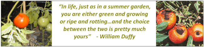 blog-william-duffy